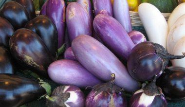 Patlıcan Yetiştiriciliği ve Üretimi