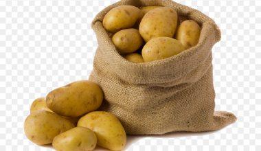 Patates Yetiştiriciliği ve Üretimi