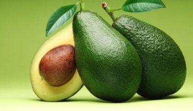 Avokado Yetiştiriciliği ve Üretimi