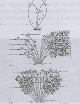 Böğürtlen Dikim sistemi