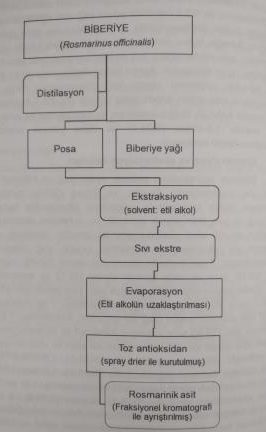 Antioksidan Üretimi