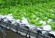 Topraksız Tarım Nedir? Nasıl Yapılır?