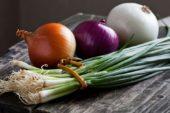 Soğan Yetiştiriciliği ve Üretimi