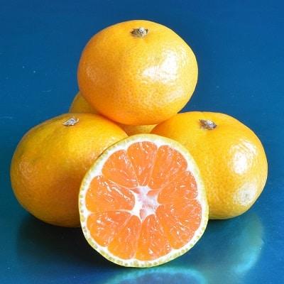 Clausellina mandarin