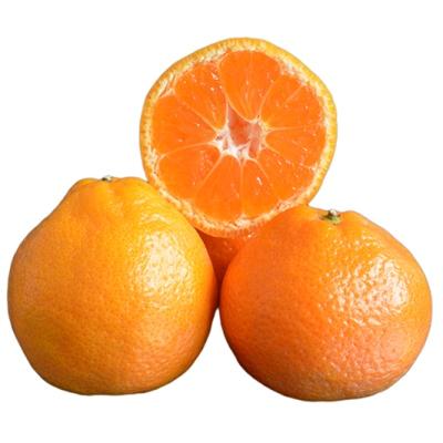 Okitsu mandarin