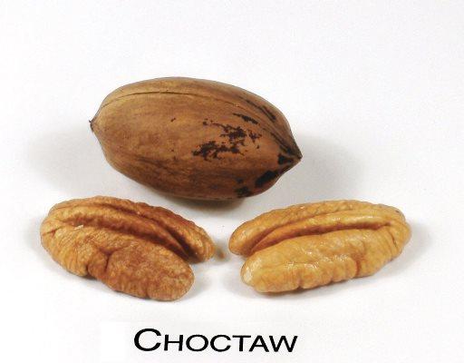 Choctaw pecan