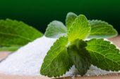 Stevia / Şeker Otu Yetiştiriciliği ve Faydaları