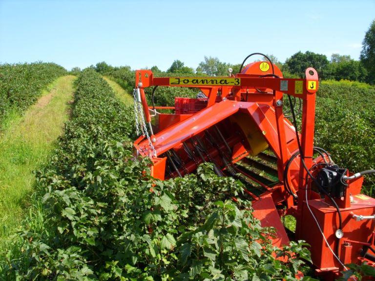 Frenk üzümü hasat makinesi