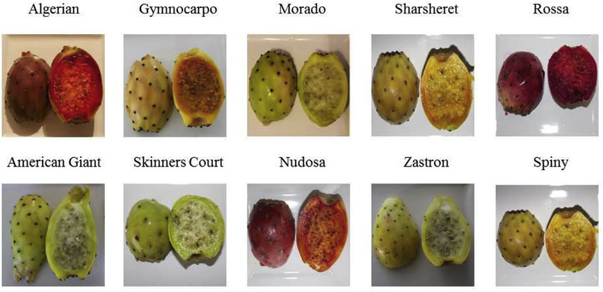 Hint inciri çeşitleri