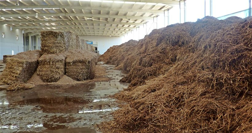 mantar-kompostu